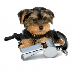 House Training Your Yorkie Puppy Best Potty Training Books For Dogs